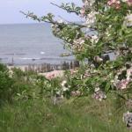 Ostsee und Obstblüte